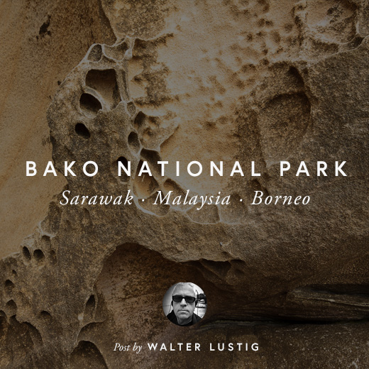 BAKO NATIONAL PARK by WALTER LUSTIG